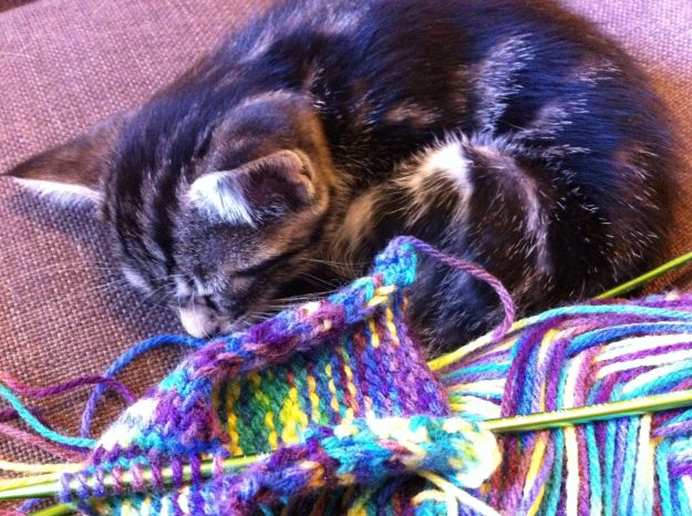 KNITTING KITTEN