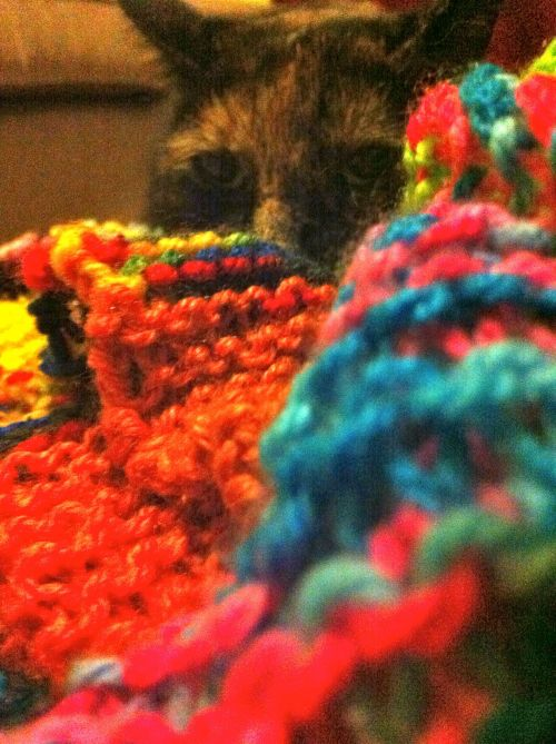 knitting-cat-colours-yarn
