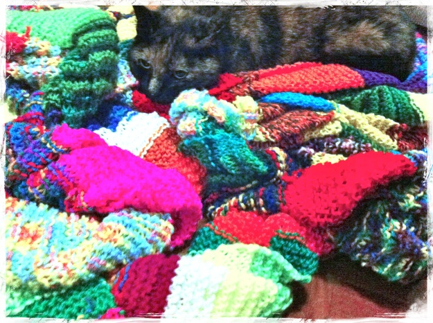 knitting-yarn-cat