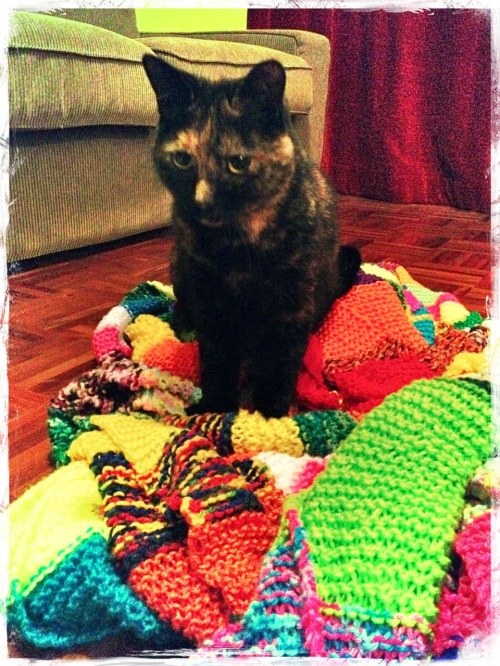 scarf-cat